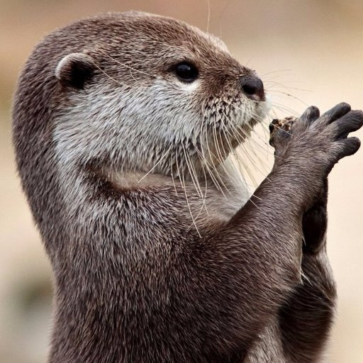 a to z of awards otter awards